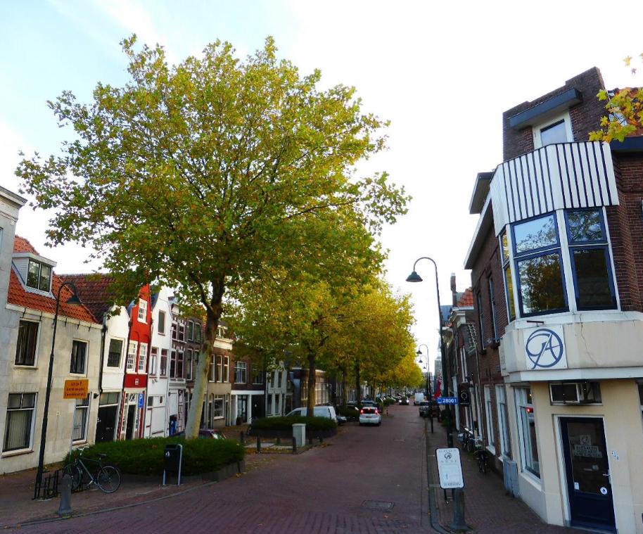 Foto van de Nieuwehaven met de platanen die in betonnen bakken staan.